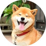 Искусственная линька собак