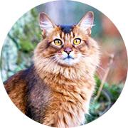 Комплекс для кошек